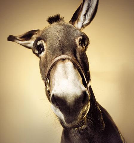 asino-donk-bet-donkey